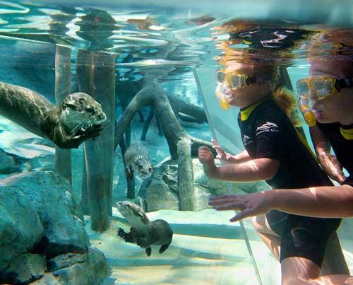 Buceo junto a animales acuáticos en Discovery Cove - Orlando, Florida