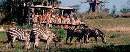 Safari en Disney's Animal Kingdom - Orlando, Florida